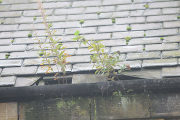 Roof damage caused by pigeons